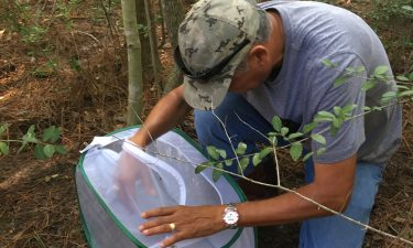 Mosquito Assassin release at impact study site by Dr. Rudy Bueno